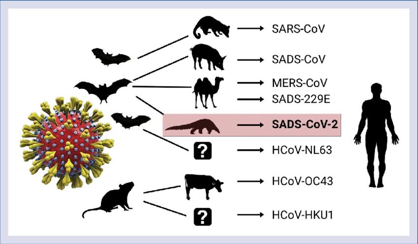origine animale du covid-19
